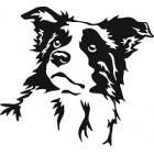 Dárky pro chovatele psa plemene Border kolie